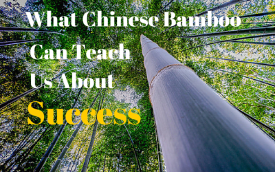 What Chinese Bamboo Can Teach Us About Success