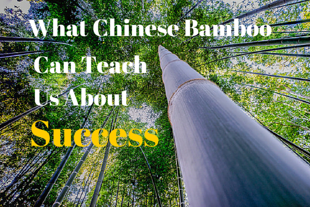 What Chinese Bamboo Can Teach Us About Success Apartment Building